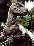 {JNT}Raptor