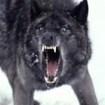 wolfy87