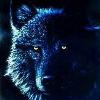 wolfen69