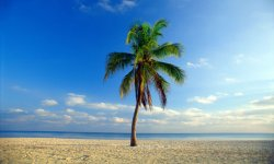 palm-tree-beach-006.jpg