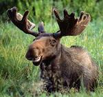 clrscr-moose