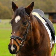 Equus_Ferus_Caballus