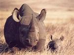 Easy Rhino